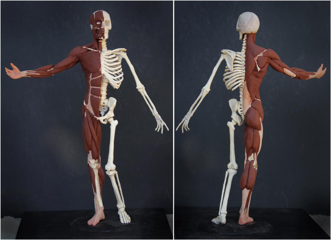 dup) L\'Ecorché: Learn Anatomy in 3D with Rey Bustos — Art MentorsArt ...