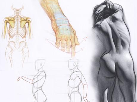Artistic Anatomy 6